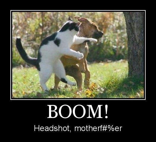 boom boom headshot. boom headshot boom boom headshot boom boom boom boom headshot. Headshot, motherf# klaer headshot Dog cat