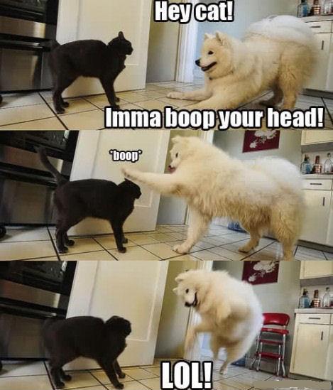 boop. .