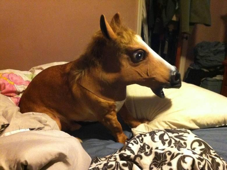 Bought a MIniature Pony. .