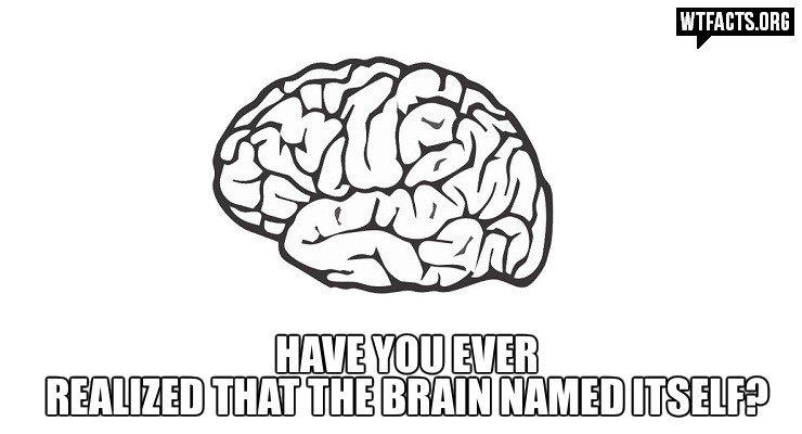 Brain. Not mine.
