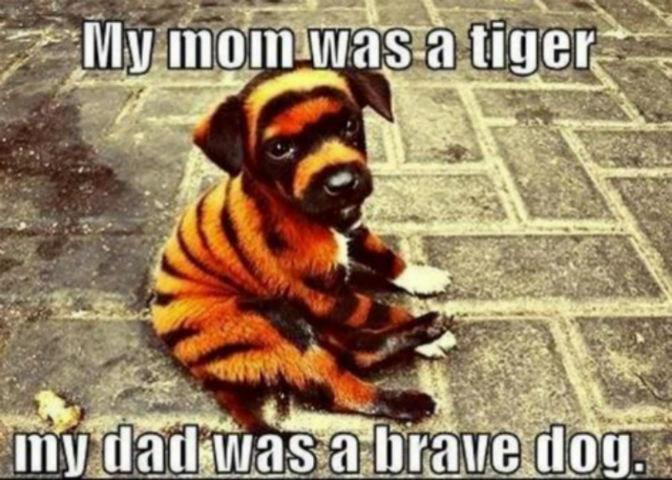 Brave, brave dog. Found this on tumblr.