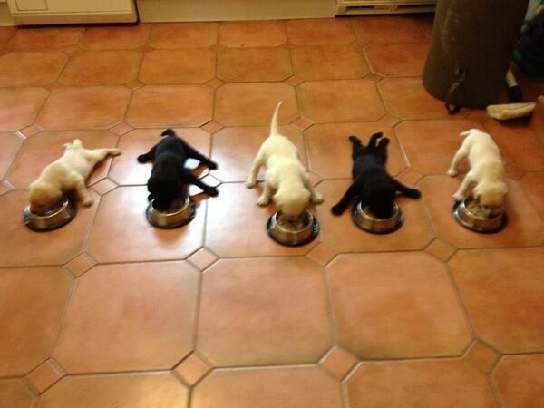 Breakfast Time!. .