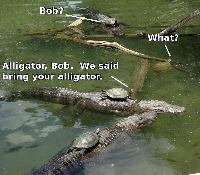 Bring ur alligator. . Alligator, Bob. We said bring your . oir. were they battling toads?