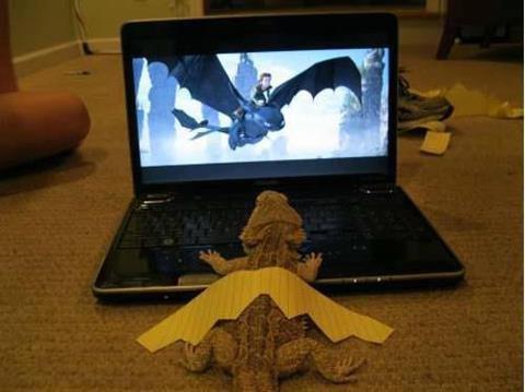 Budget dragon. It can dream all it wants but it's still just a lizard.