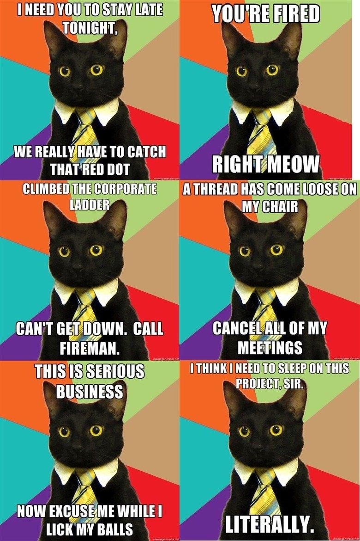 Business cat compilation. lolwhitespace.. it TO emu mia' ismith BOT Mnu. 'i' itifoi' ius. that damn laser