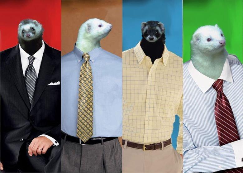 business of ferrets. srs bsns. IAF