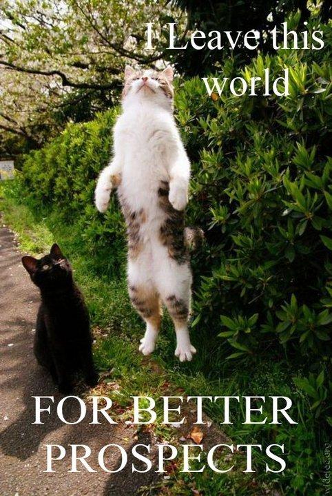 buzzlightcat. .. Black cats don't go to heaven