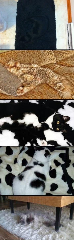 Camouflage Cats. tomorrow iz caturday!.
