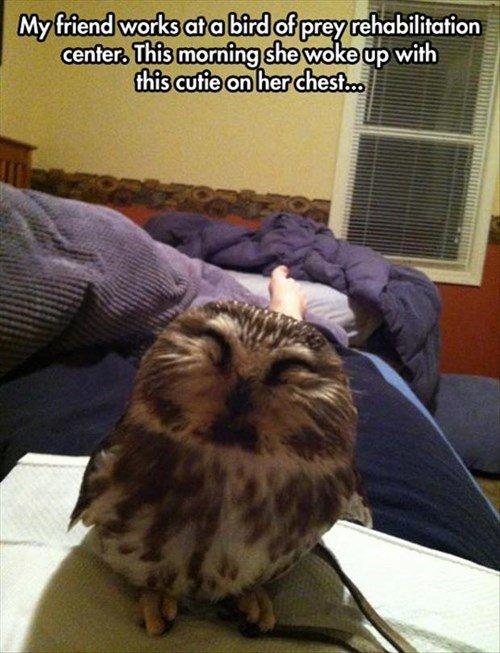 Cant See. OPEN YOUR EYES. F E? viii rehabilitation owl Cute woman rehabilitation friend