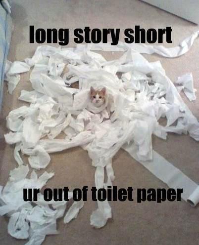 Cat Story. .