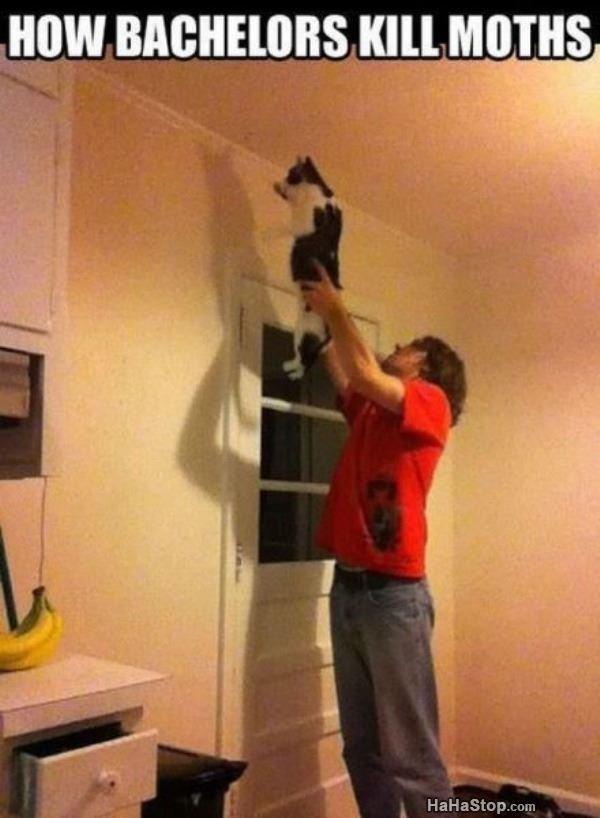 Cat attack. Source: hahastop.