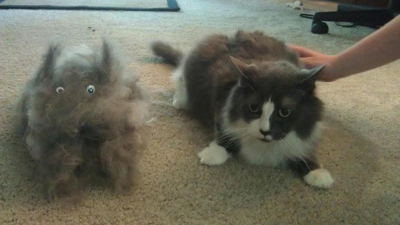 Cat+brush =2 cats. Cat #2 is not amused.. cat brush Hair Ball