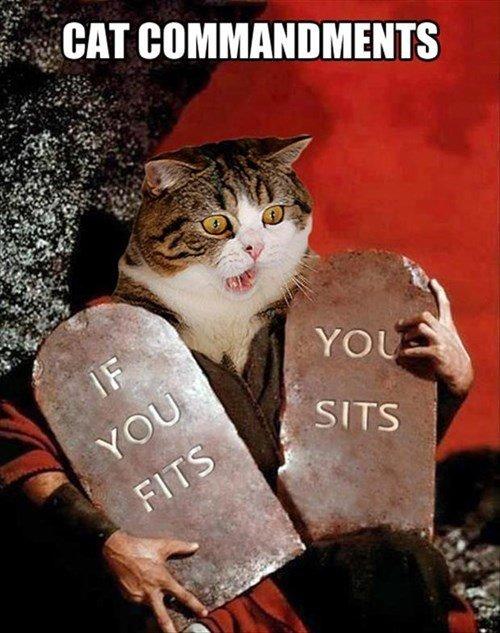 Cat Commandments. bzzzzzzzzzzzzzzzzzzzz. BAT ' Rt