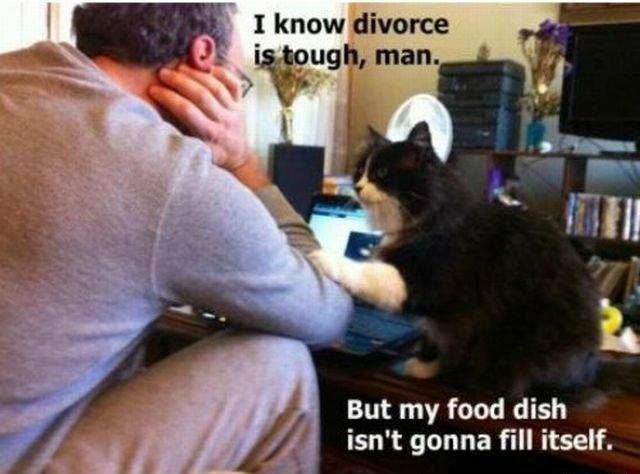 Cat. feelsbadman.jpg. But my food dish isn' t gonna fill itself. cat food divorce