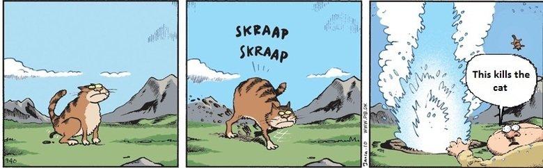 Cat is kill. The second death.. cat is kill
