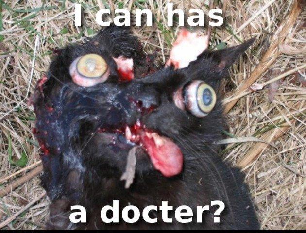 cat. lmao.. you sick .