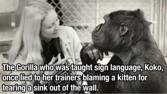 Cat must've been super strong. .