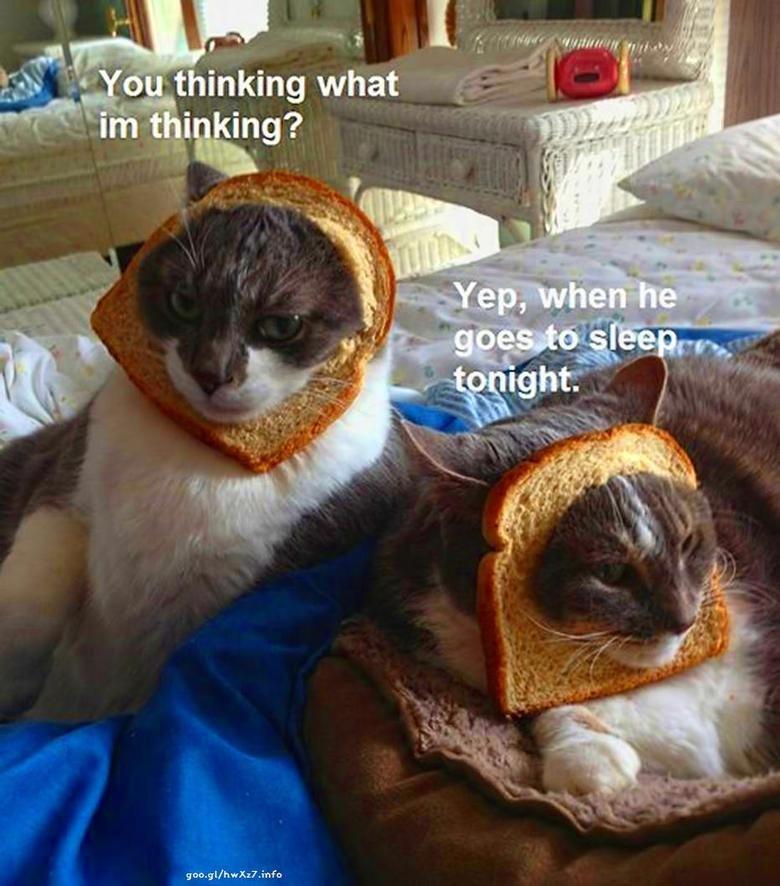 cat. owner. srow. srt/ cat Revenge sleep