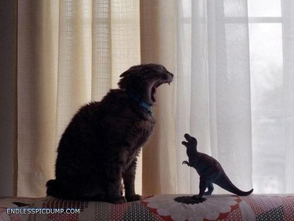 Cat vs. T-rex. Not mine, found while stumbling. ali IDLE Mti PI MEIN Cars crashes Cats