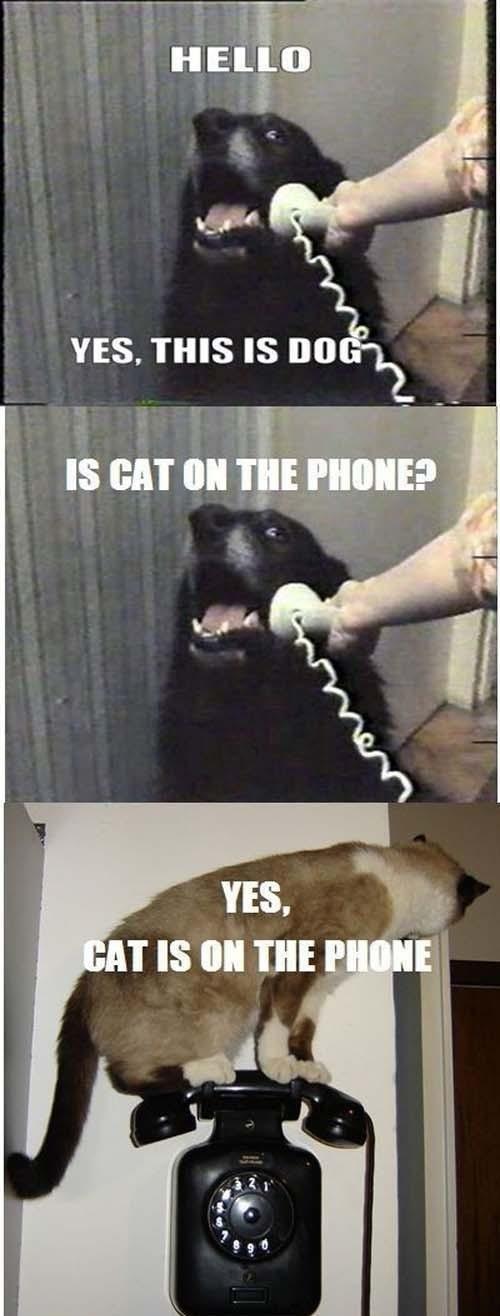 Cat. . oh