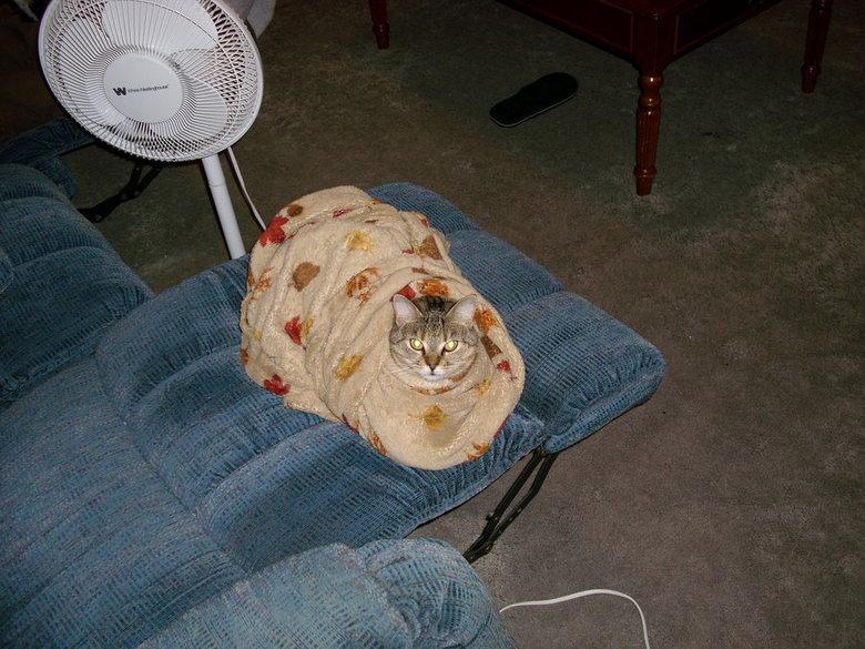 "Cat Burrito. The owner was never seen again..... im sure the correct phrase is ""purrito"""