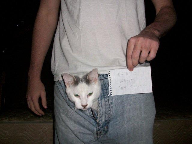 cat porn Blame Your Kitty Cat - Gizmodo.