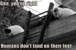 """cat sience. . tmn' t Hill"""" tlel tait THEE"""