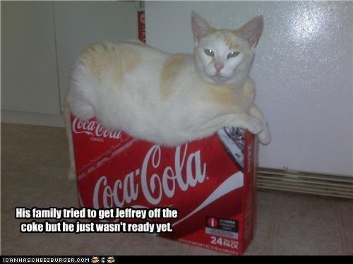 Cat on Coke. .