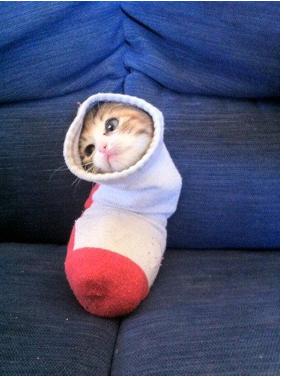Cat_apillar. lol kitty.. months later