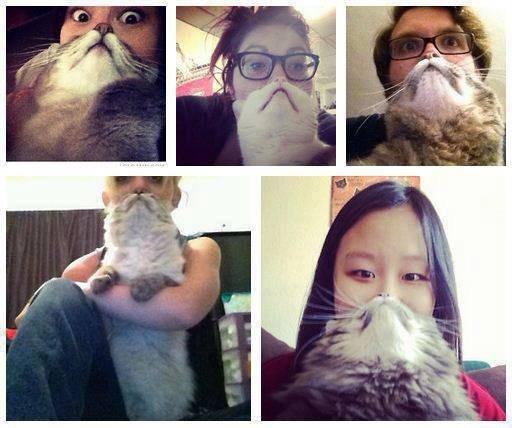 Catbeard.. . Furry