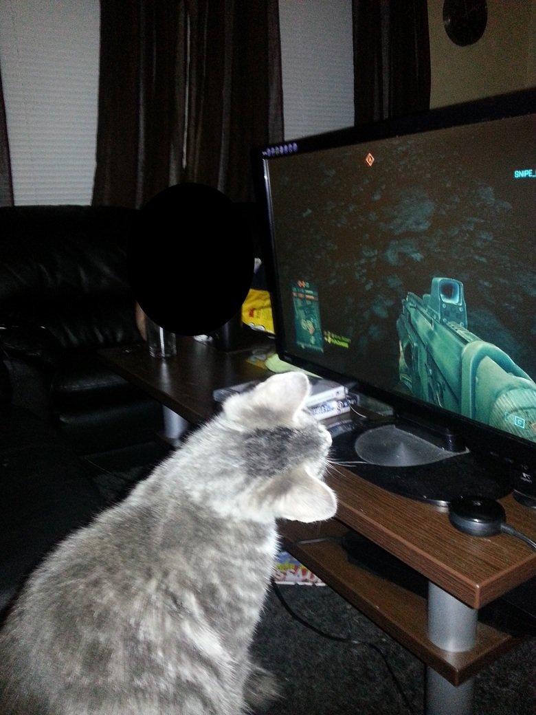 Catfield. My Cat love watch me play Battlefield .