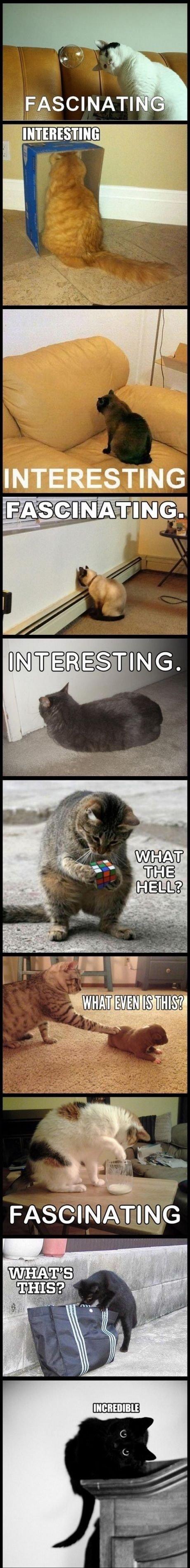 Cats are complex. .