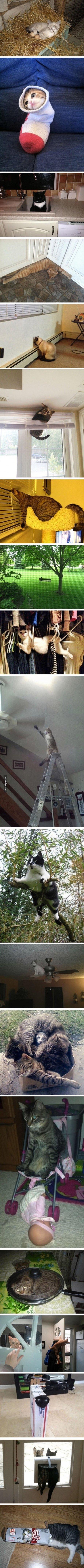 cats are weird sometimes. .. i aint got no legs boy