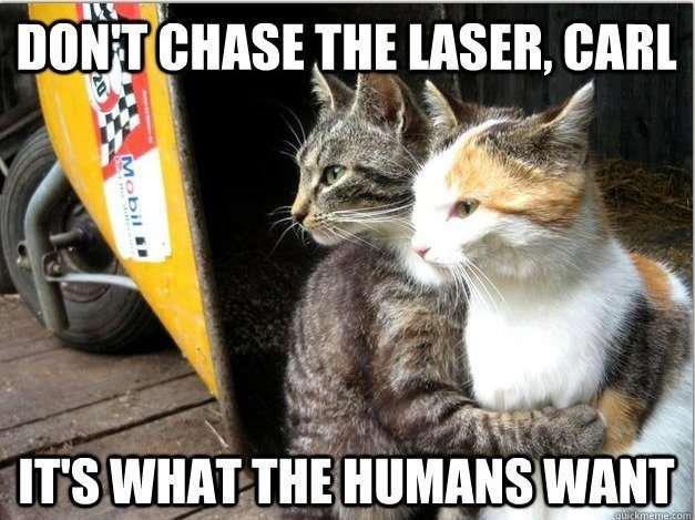 Cats in a nutshell. carrrrrrrrrrrrrrrrrrrrrrrrrrrrrrrrrrrl. DIDN' T THE , CARI irs wnna__ ; wnru