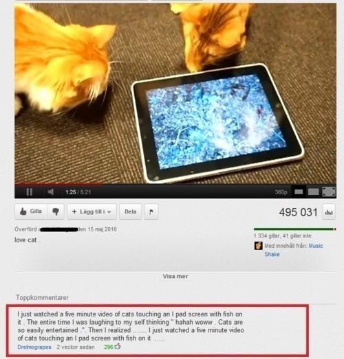 "Cats. It's a test.. h thm q ' : IJJI "" Dell F 495 031 id k In -rna' rae H Mayy HI: Hum: Stoke Inou mm"" washed a he minutia was tal can touching 31 I pad screen"