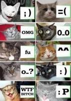 Cats memes. tits.
