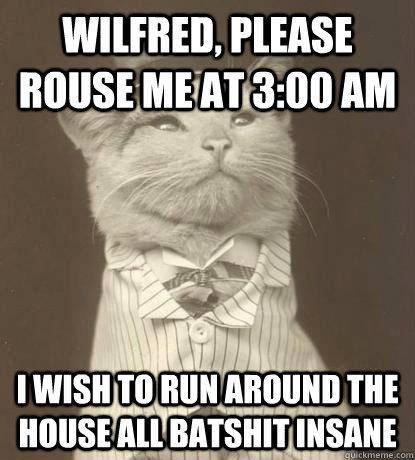 Cats. Source: Imgur. runs: