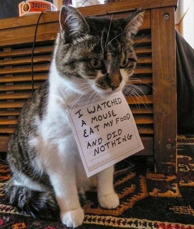 Cats. cats.