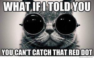 cats. .