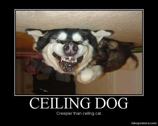 Happy Halloween!  Ceiling+Dog_234fc4_3087174
