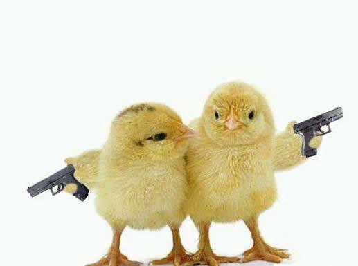 Chicks with guns. yeah..