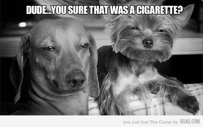 Chill dawg. .