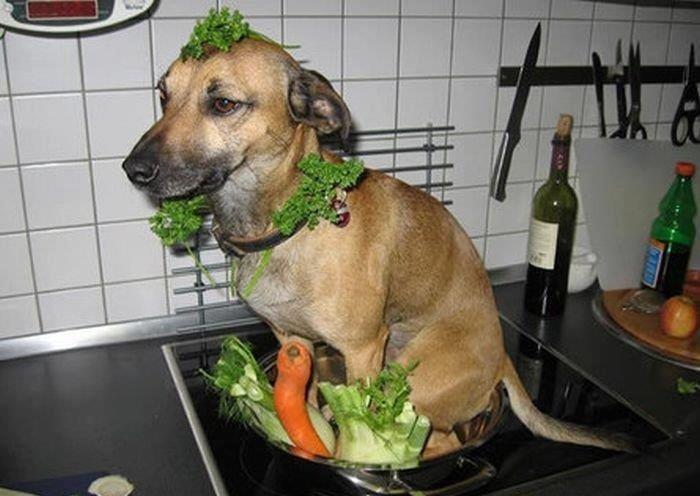 Chinese Salad anyone???. .. Ill be damned! Ha!