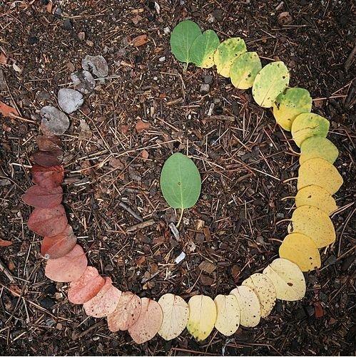 Circle of Life. .