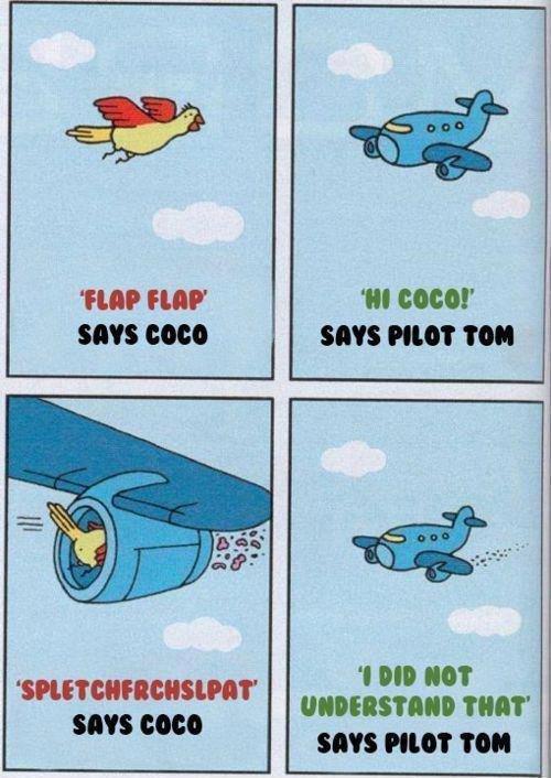 "Coco the bird. I'm sorry I can't hear you.... COED SIN TON tatter ""M'' SEW PILOT NI SIN GAGG"