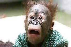 Confused monkey. Confused monkey.