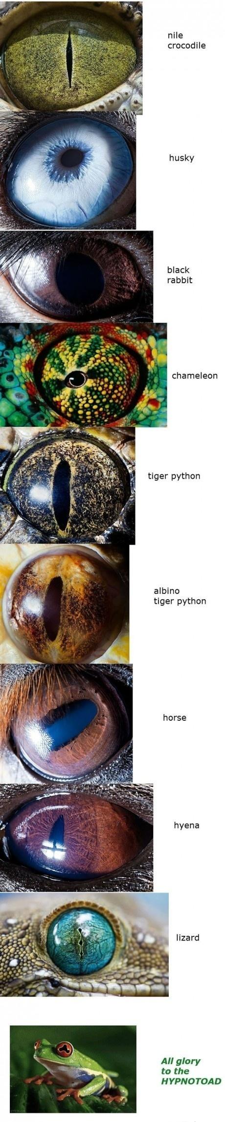 Cool eyes. .. sauron