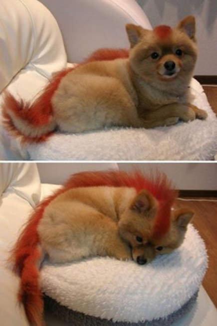 coolest puppy evar!!. .