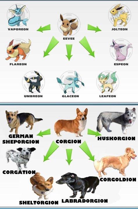 Corgis, The Pokemon of the Dog World. Omg! Legolas killed himself!!! 7rl.in/OrlandoBloomSueside. imt Itt. 1 J. umbreon will always be fav
