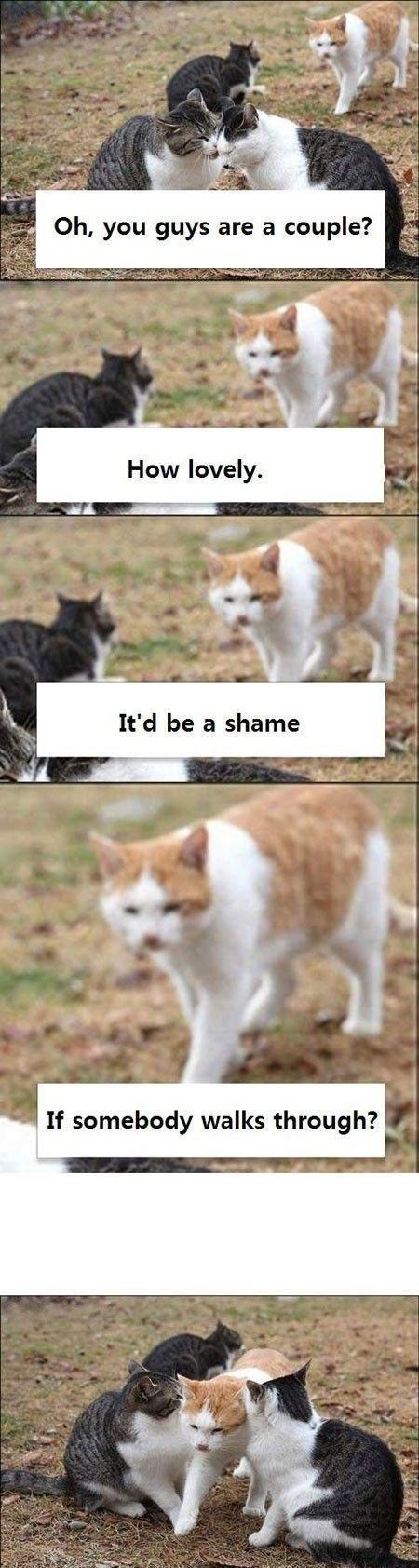 Couple. Three cats. If walks through?
